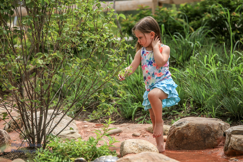 2016-07-17 Fort Wayne Zoo 831LR.jpg