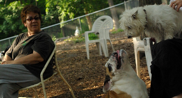 july 1 resize::Isabella, Buddy (bulldog pup)