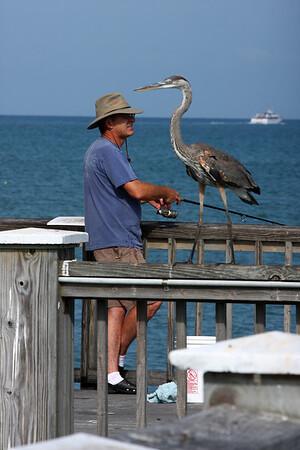 3 fishermen: Boat, Man, Bird