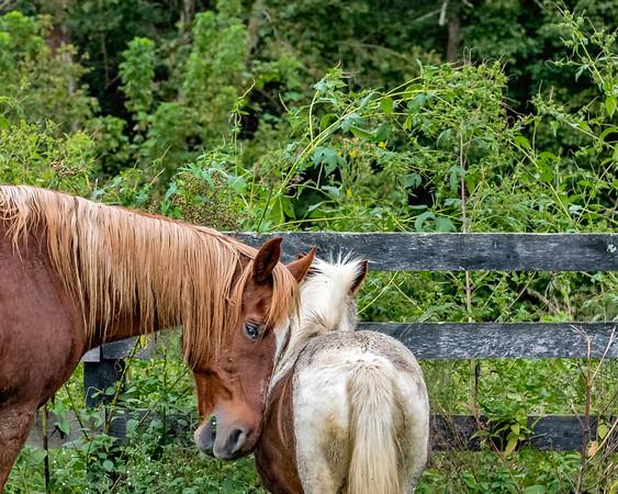 Blind Horses