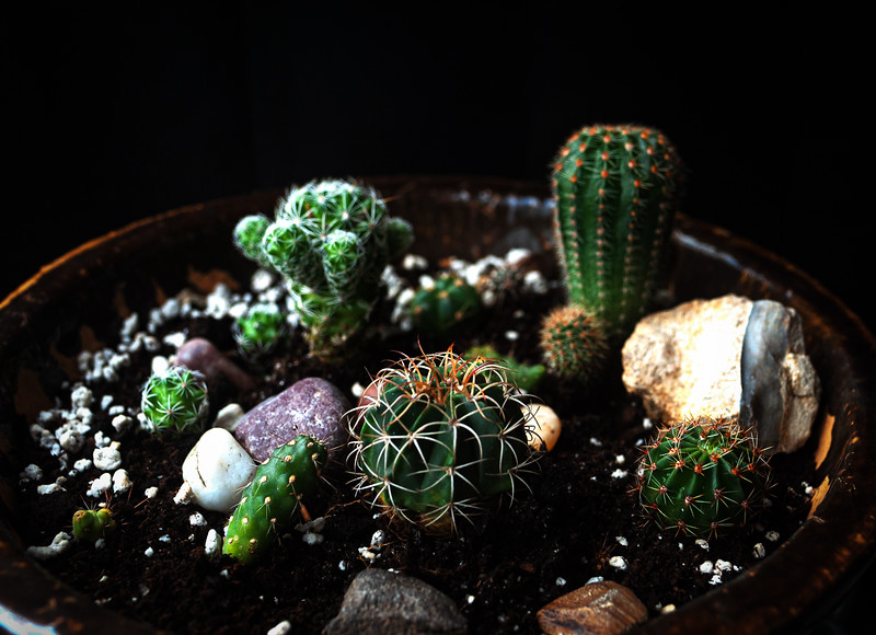 cactus nursery 052520-.jpg