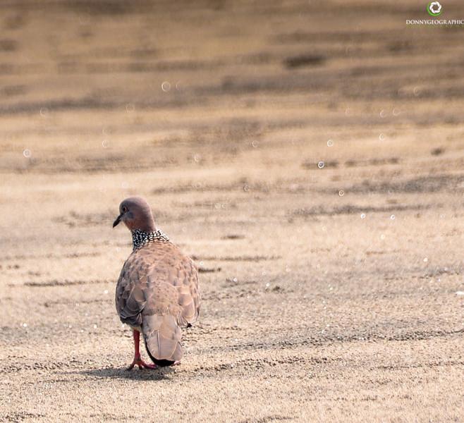 Seminyak beach bird