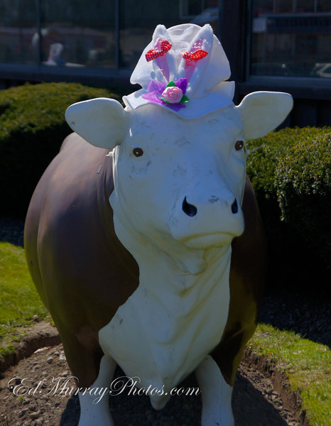 The Cadbury Cow? Thank you for all your comments this week! Have a great weekend and holiday Catch you all om Monday!