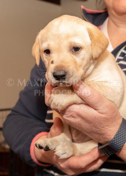 Weika Puppies 2 Mar 2019-8457.jpg