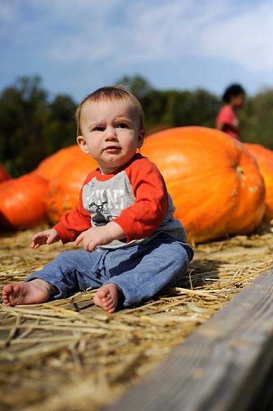AJ checks out the local pumpkin harvest