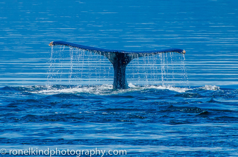 A whale's tail.