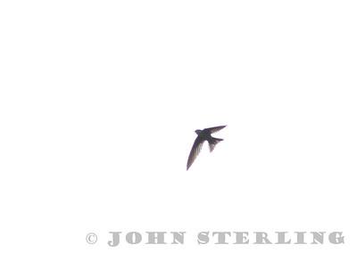 Sterling's Philippine Birds