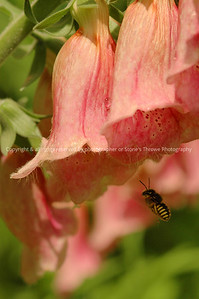 016-bee_flower-nlg-12jun08-c1-0017