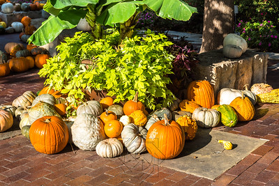 Cluster of pumpkins and gourds