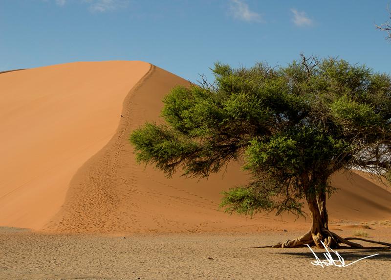 Dune 45-2.jpg