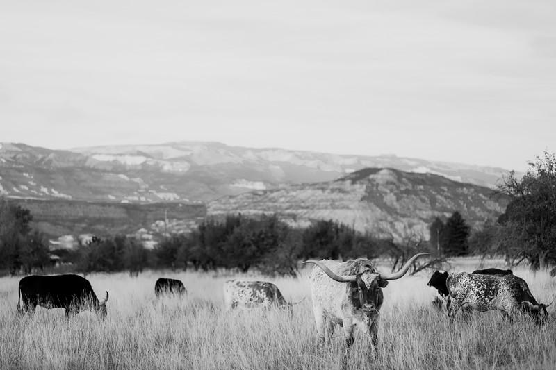 Longhorn-2.jpg