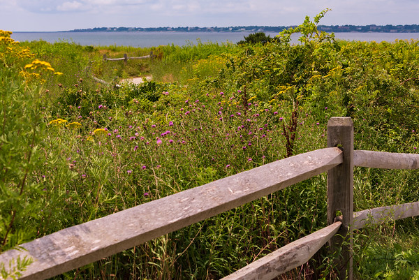 Sachuest Point NWR - July 28, 2021