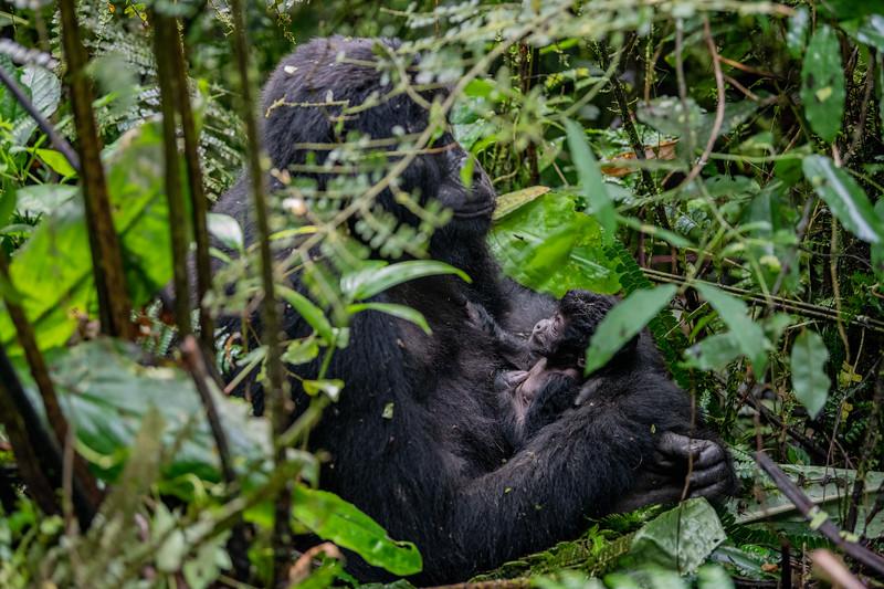 Uganda_T_Gor-20.jpg