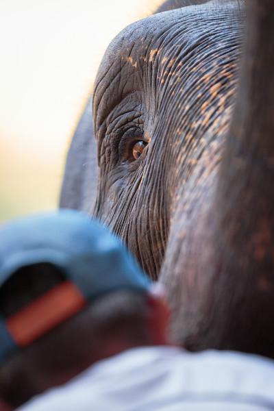 Close-up of an Elephant