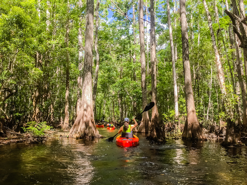 Kayaking Shingle Creek - Things to do in Kissimmee