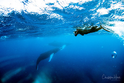Stranger in a Strange Land: Swimming with Humpbacks