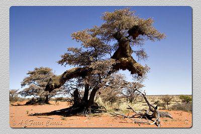 Kalahari (Tswalu)