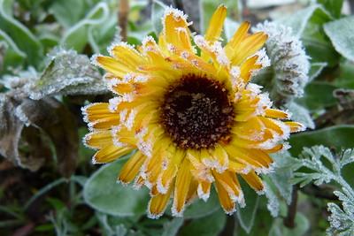 Ein Garten mit Poesie