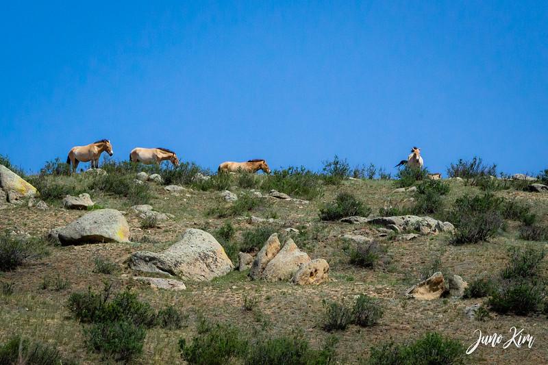 Kustei National Park__6109328-Juno Kim.jpg