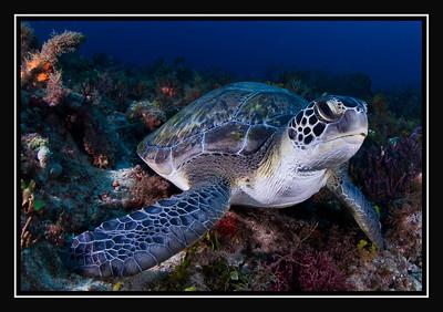 Sea Turtle Gallery