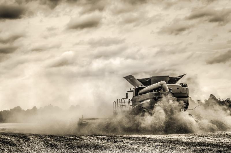 Wheat Harvest June 2014 10 Sepia.jpg