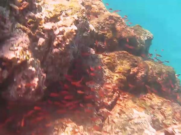 Schools of fish, Galapagos