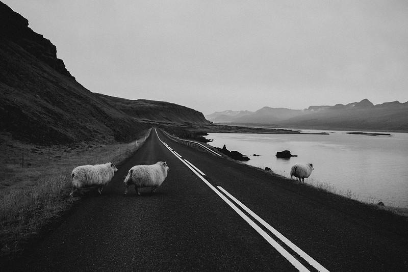Tu-Nguyen-Destination-Wedding-Photographer-Iceland-Elopement-Fjaðrárgljúfur-16-150a-19a.jpg
