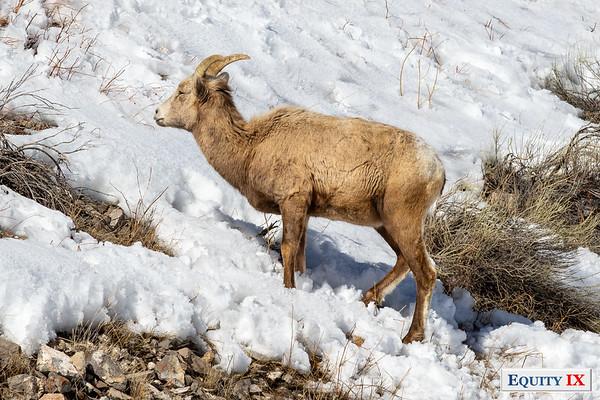 2019 Grand Tetons - Wildlife
