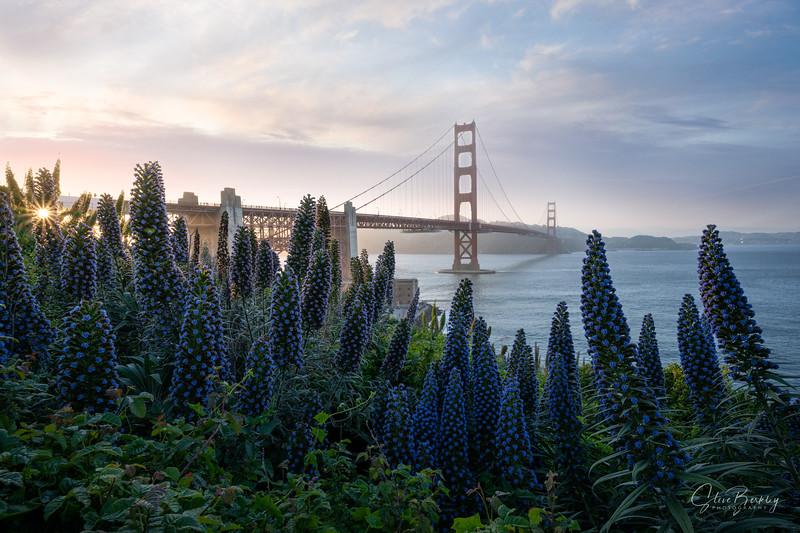 Golden Gate at the Presidio