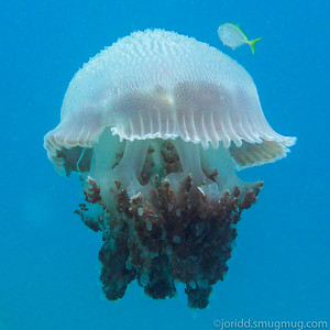 Racha Yai Diving