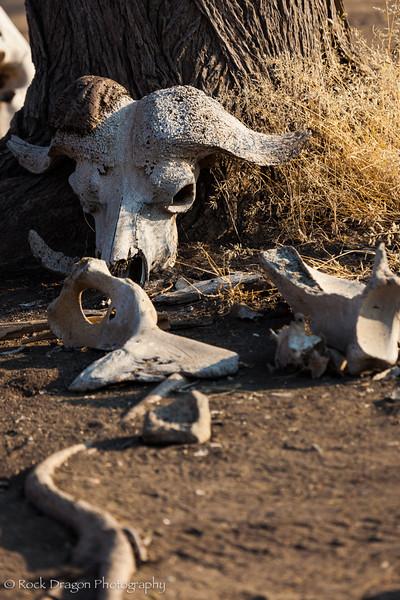 South_Serengeti-7.jpg
