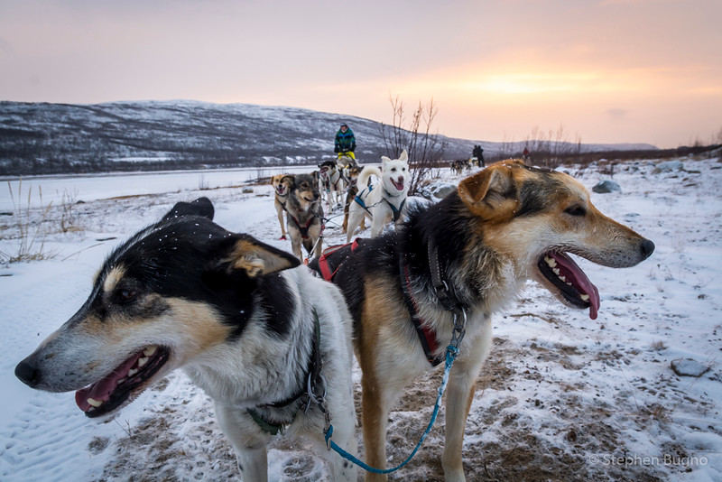 Dog Mushing-9833.jpg