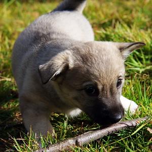 2010-08 Ronja dracht en pups