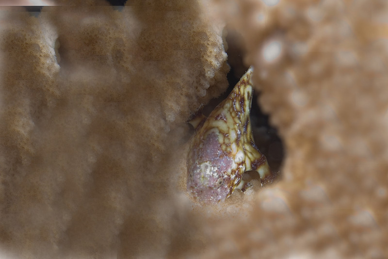 Reticulated Frog Fish 1.jpg