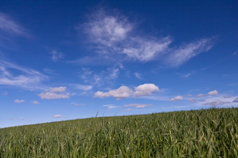 Grashøsting2011-54