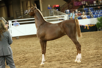 4 Silver Sire Nomination Yearling Colts & Geldings
