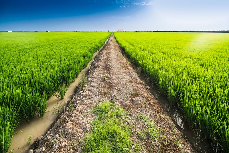 Path through rice fields, Isla Mínima, La Puebla del Río, Seville, Spain.
