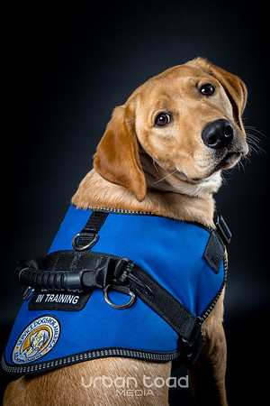 Service Dogs for America 2017