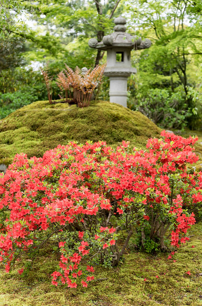 Zen garden, Tenryuji, Kyoto