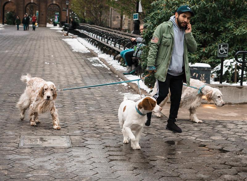 Dog walker central park.jpg