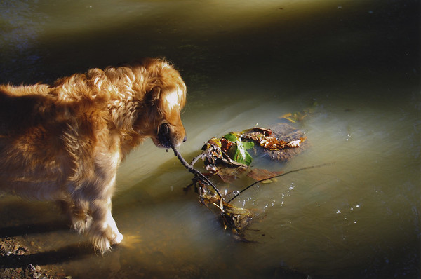 Dog Photographer of the Year 2007