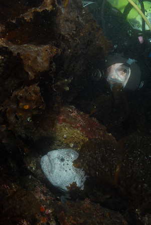© 2012 Norris Colby-0032 - Me with mature male wolf eel. Photo by Norris Colby.