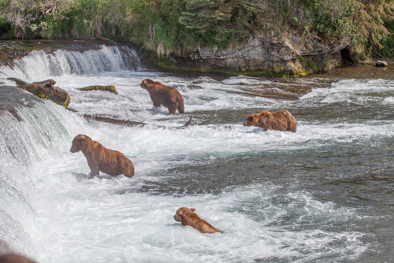 Katmai National Park - Brooks Falls