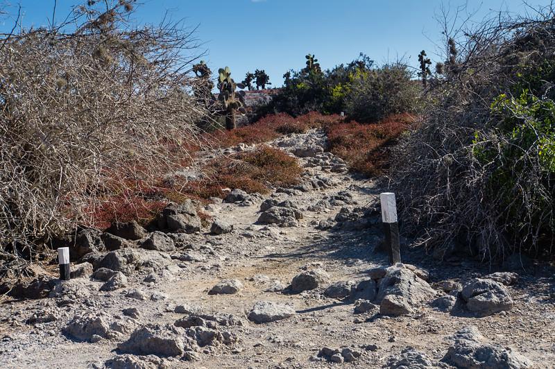 Path on South Plaza Island