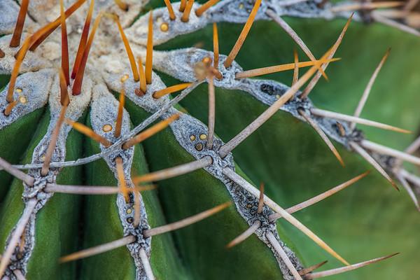 Tucson Botanical Gardens - Tucson, AZ - 2020