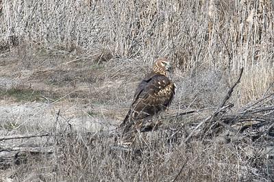 Birds in Lower Klamath