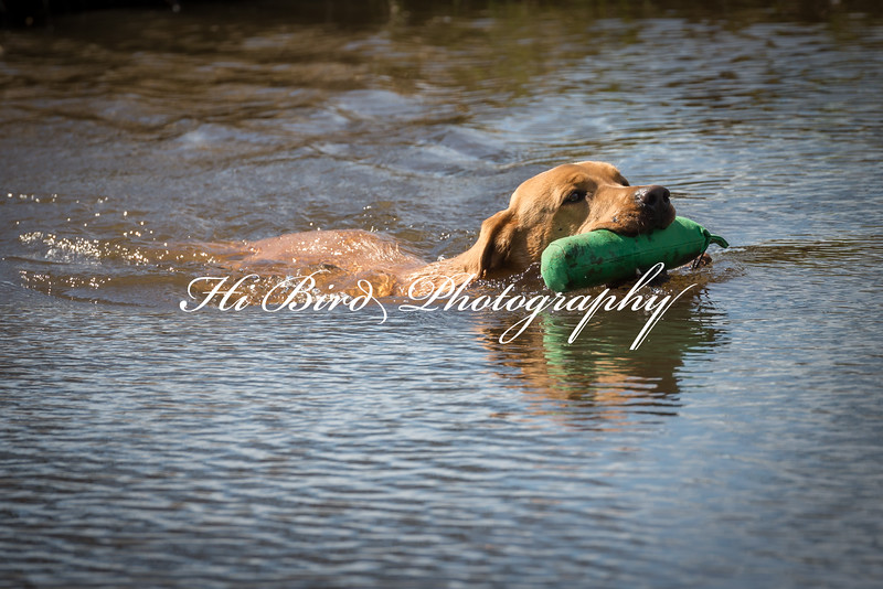 retrievers-143.jpg