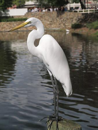 0 Egrets