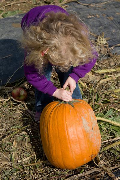 Beverly decides on a pumpkin