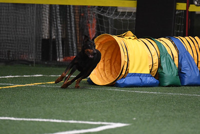 Delaware Valley German Shepherd Dog Club AKC Agility Trial September 21-22